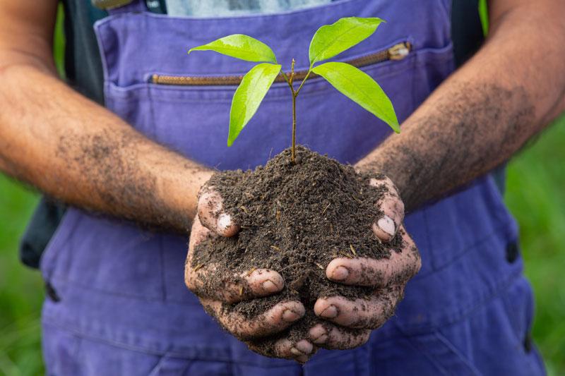 Unkraut in Komposterde beseitigen ohne Pflanzenschutzmittel