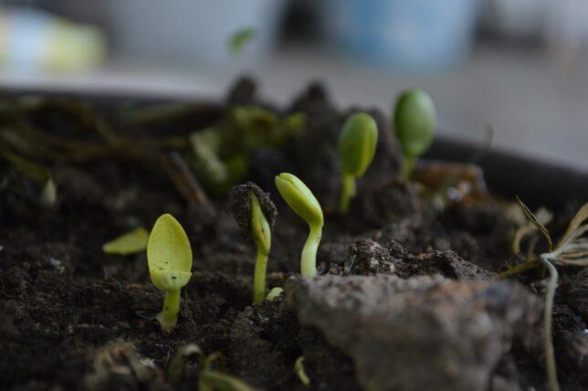 Pflanzen Anzucht
